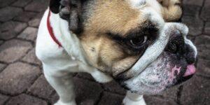 Close-up shot of dog